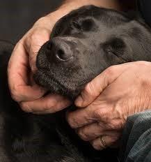 Aafje  Hondenbezoek Rozenburcht
