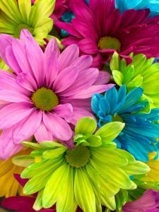 Sint Jacob  Vrijwilliger bloemschikken